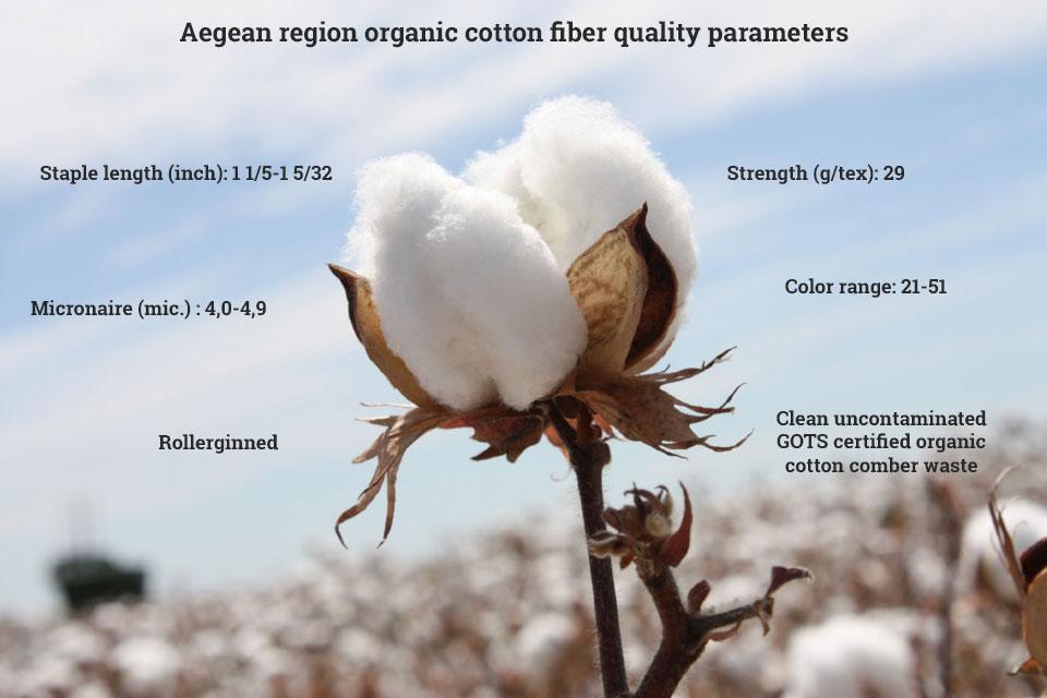 organic-cotton-main-image